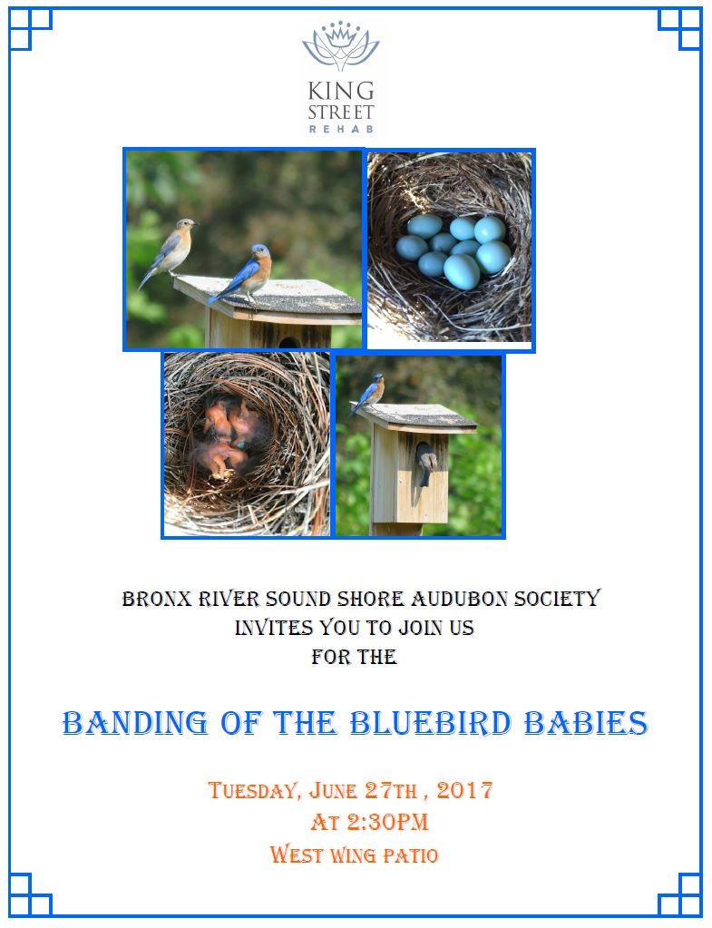 Bronx River Shore Audubon Society Presents: Banding of the Baby Bluebirds
